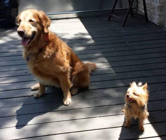 Cornflake & Annie