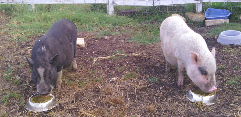 Pinkie & Blackie