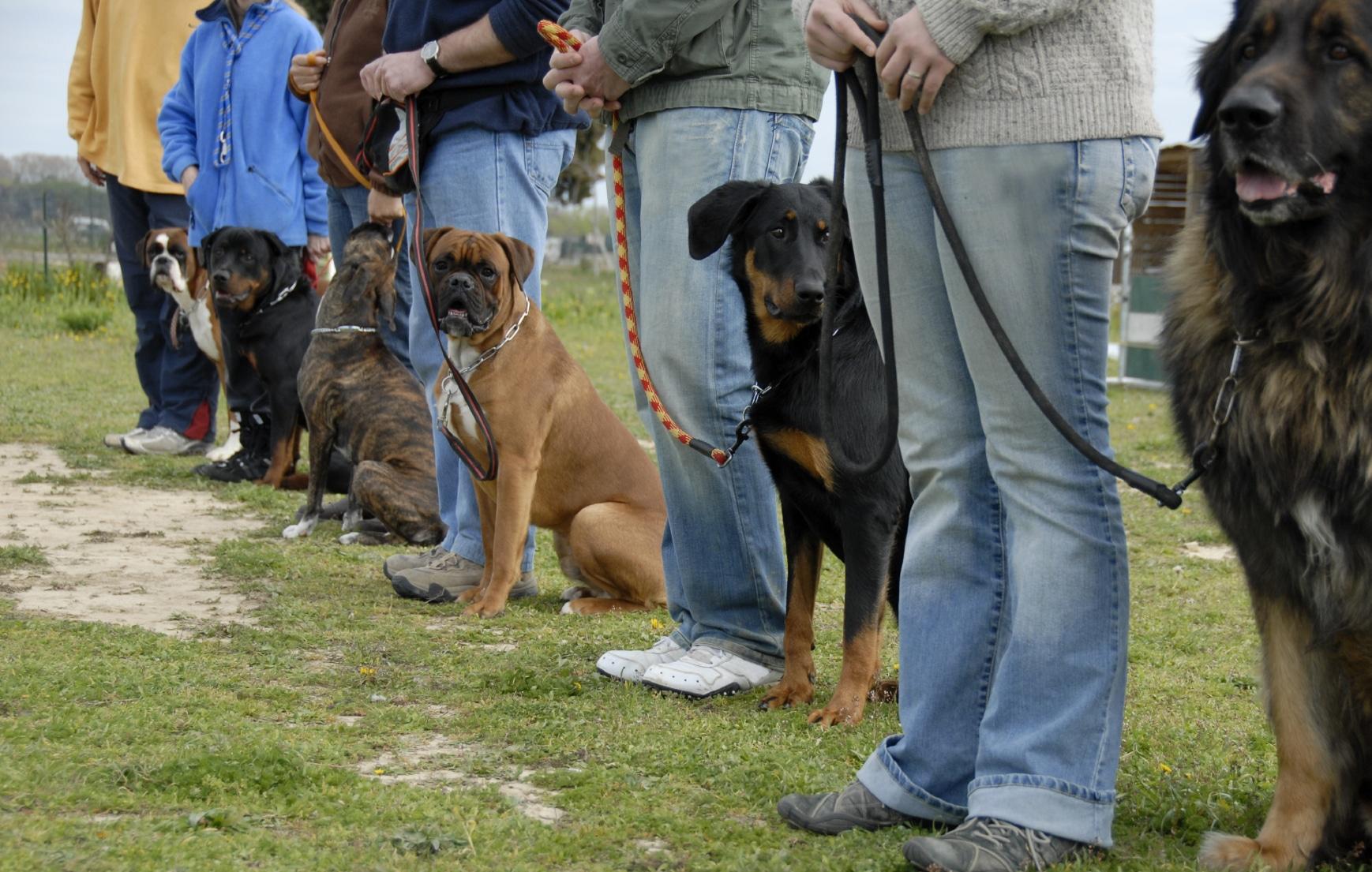 Sit, Ubu, sit! …Good dog!