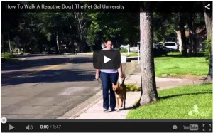 How To Walk A Reactive Dog